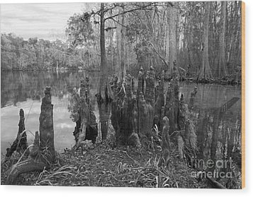 Swamp Stump Wood Print