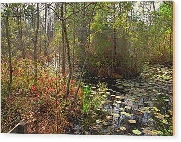 Swamps In Sc Wood Print by Susanne Van Hulst