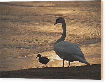 Wood Print featuring the photograph Swan And Baby At Sunset by Richard Bryce and Family