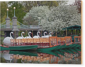 Swan Boat Spring Wood Print by Susan Cole Kelly