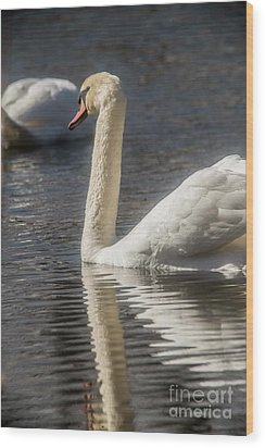 Wood Print featuring the photograph Swan by David Bearden
