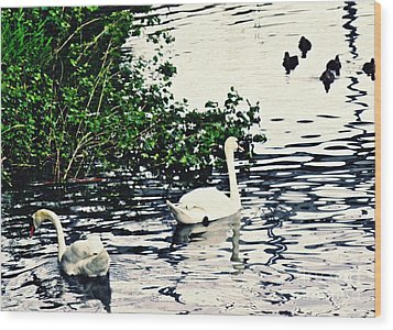 Wood Print featuring the photograph Swan Family On The Rhine 2 by Sarah Loft