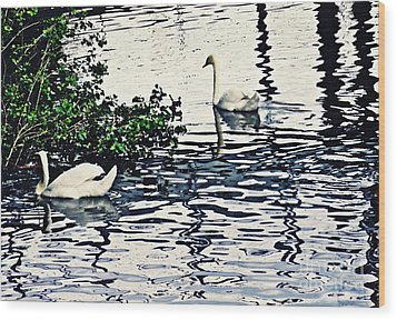 Wood Print featuring the photograph Swan Family On The Rhine 3 by Sarah Loft