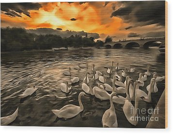 Swan Gloaming Kingston U K Wood Print by Jack Torcello