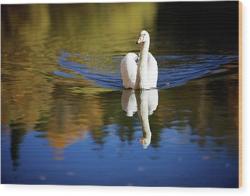 Swan In Color Wood Print