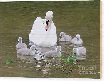 Wood Print featuring the photograph Swan Lake 1 by Bill Holkham