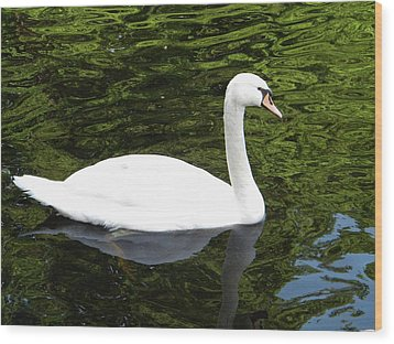 Wood Print featuring the photograph Swan by Manuela Constantin