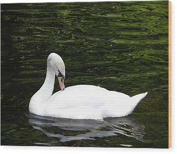 Wood Print featuring the photograph Swan May by Manuela Constantin