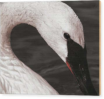 Wood Print featuring the photograph Swan Neck by Jean Noren