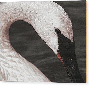 Swan Neck Wood Print by Jean Noren