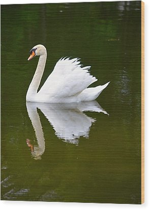 Swan Reflecting Wood Print