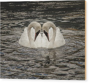 Wood Print featuring the photograph Swan Times Two by Mary Hone