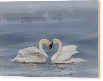 Swan Valentine - Blue Wood Print by Patti Deters