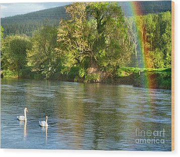 Swans And Double Rainbow 1 Wood Print by Debra Collins