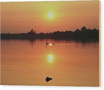 Swans At Sunset  Wood Print by Martina Fagan