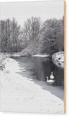 Swans In The Snow Wood Print by Gary Eason