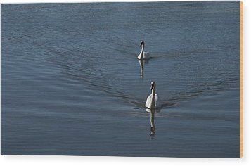 Wood Print featuring the photograph Swans On Blue by Charles Kraus