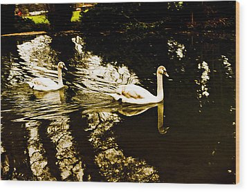 Swans On River Wey Wood Print