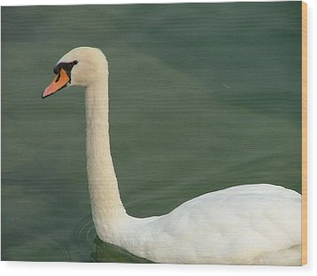 Swan's Portrait Wood Print by Rita Fetisov