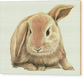 Wood Print featuring the drawing Sweet Bunny by Heidi Kriel