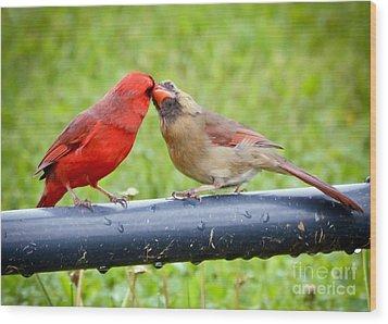 Sweet Cardinal Couple Wood Print