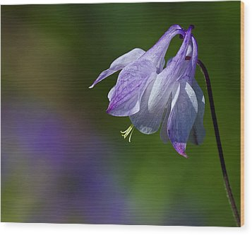 Sweet Columbine Wood Print by Margaret Barry