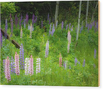 Sweet Flowers Of Summer Wood Print by Lynn Wohlers