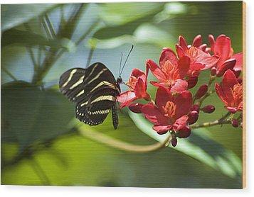 Sweet Nectar Wood Print by Carolyn Marshall