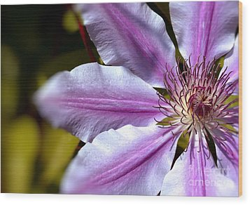 Sweet Nelly Clematis Wood Print