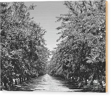 Wood Print featuring the photograph Sweet Path by Suzette Kallen