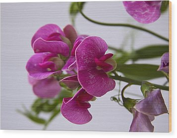 Sweet Pea Wood Print