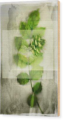 Sweet Rustic Pine Wood Print by Dan Turner
