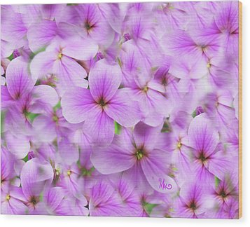 Sweet Spring Meadow Flox Wood Print