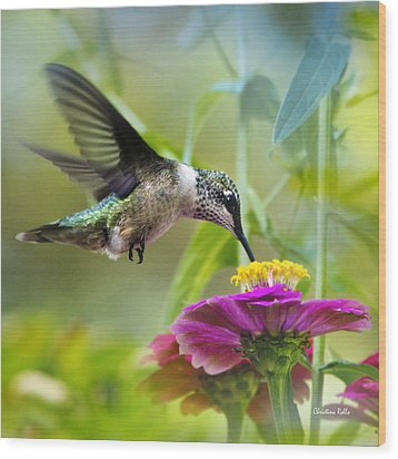 Sweet Success Hummingbird Square Wood Print by Christina Rollo
