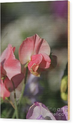 Sweet Sweet-peas Wood Print by Andrea Jean