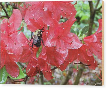 Sweet To Be An Azalea Tree Wood Print