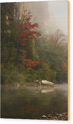 Sweetgum In The Mist At Steel Creek Wood Print by Michael Dougherty