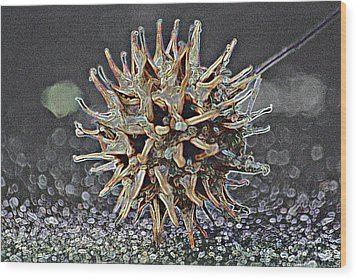 Wood Print featuring the photograph Sweetgum Ball by Donna G Smith