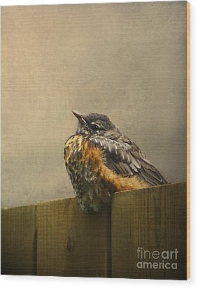 Sweetly Sitting Wood Print by Jan Piller