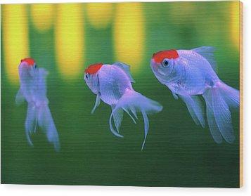 Swimming Fishes Underwater Wood Print by Yuki Crawford