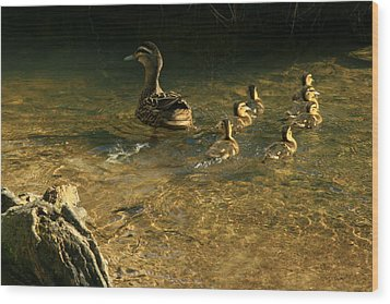 Swimming Lessons Wood Print by Terry Perham