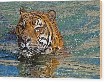 Swimming Tiger Wood Print