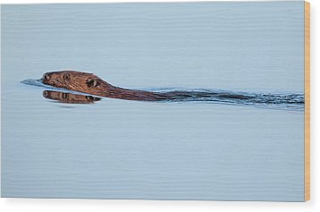 Swimming With The Beaver Wood Print by Bill Wakeley