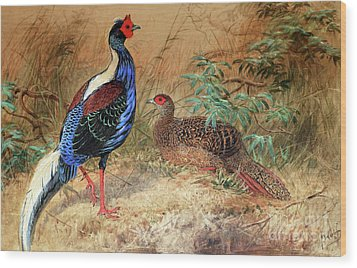 Swinhoe's Pheasant  Wood Print by Joseph Wolf