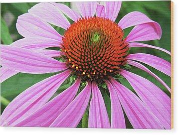 Swirling Purple Cone Flower 3576 H_2 Wood Print