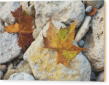 Sycamore Leaves On Creek Bed Stones. Wood Print by Mark Weaver