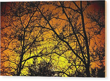 Sycamore Sunset Wood Print