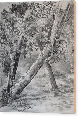 Sycamore Tree In Goliad State Park Wood Print by Karen Boudreaux