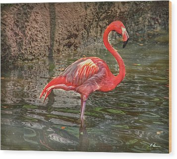 Wood Print featuring the photograph Symbol Of Florida by Hanny Heim