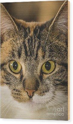 Symmetrical Cat Wood Print